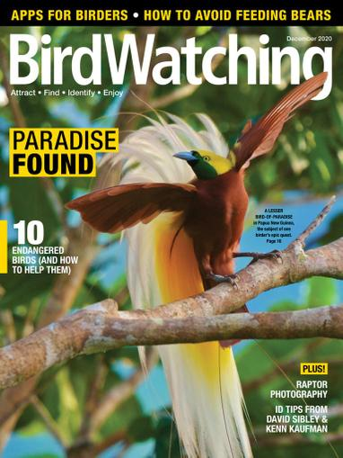 Birdwatching Magazine November 1st, 2020 Issue Cover