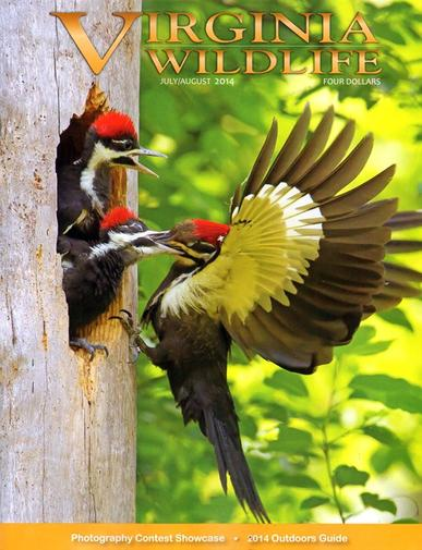 Virginia Wildlife Magazine Cover